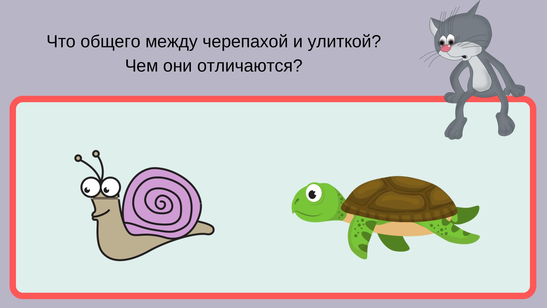Что общего между черепахой и улиткой?