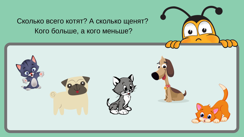 Сколько всего котят? А сколько щенят?