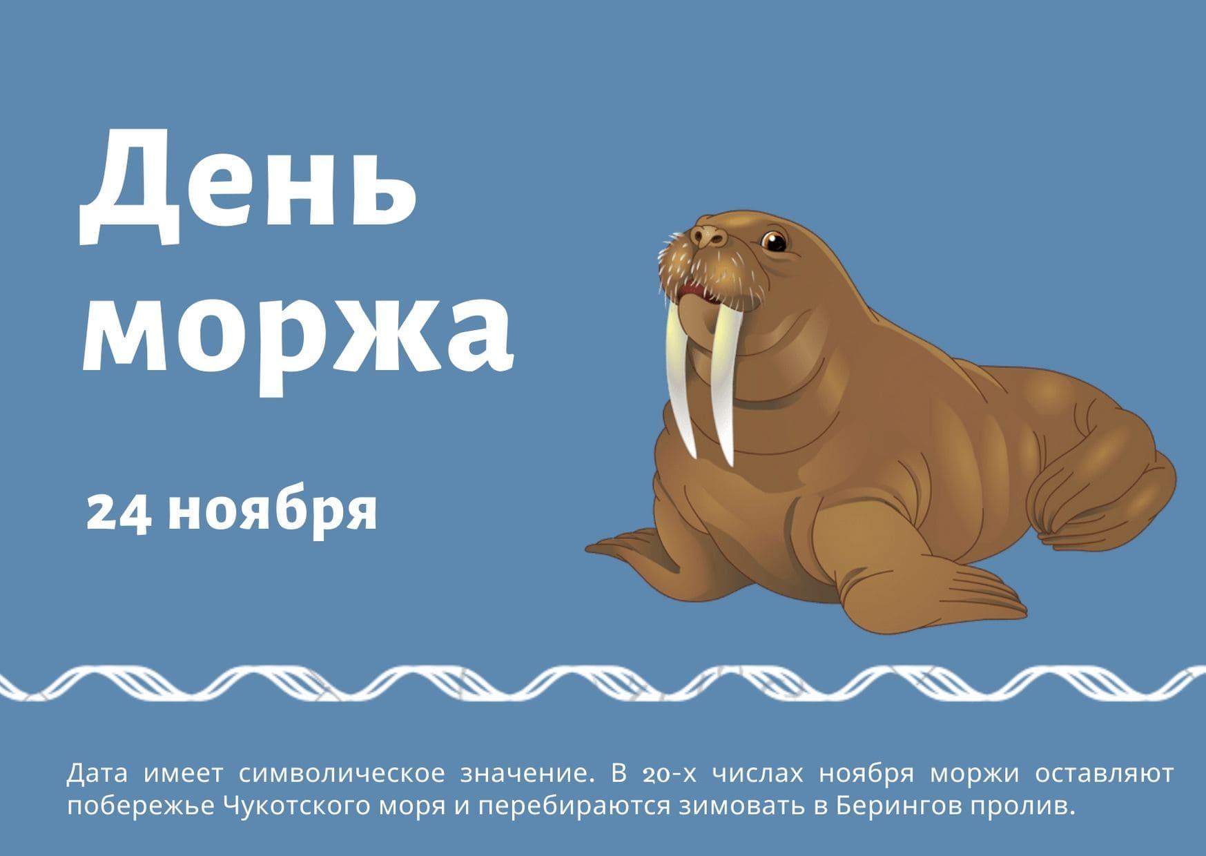 День моржа. 24 ноября