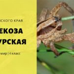 Фауна Пермского края. Алопекоза кунгурская. Окружающий мир 4 класс