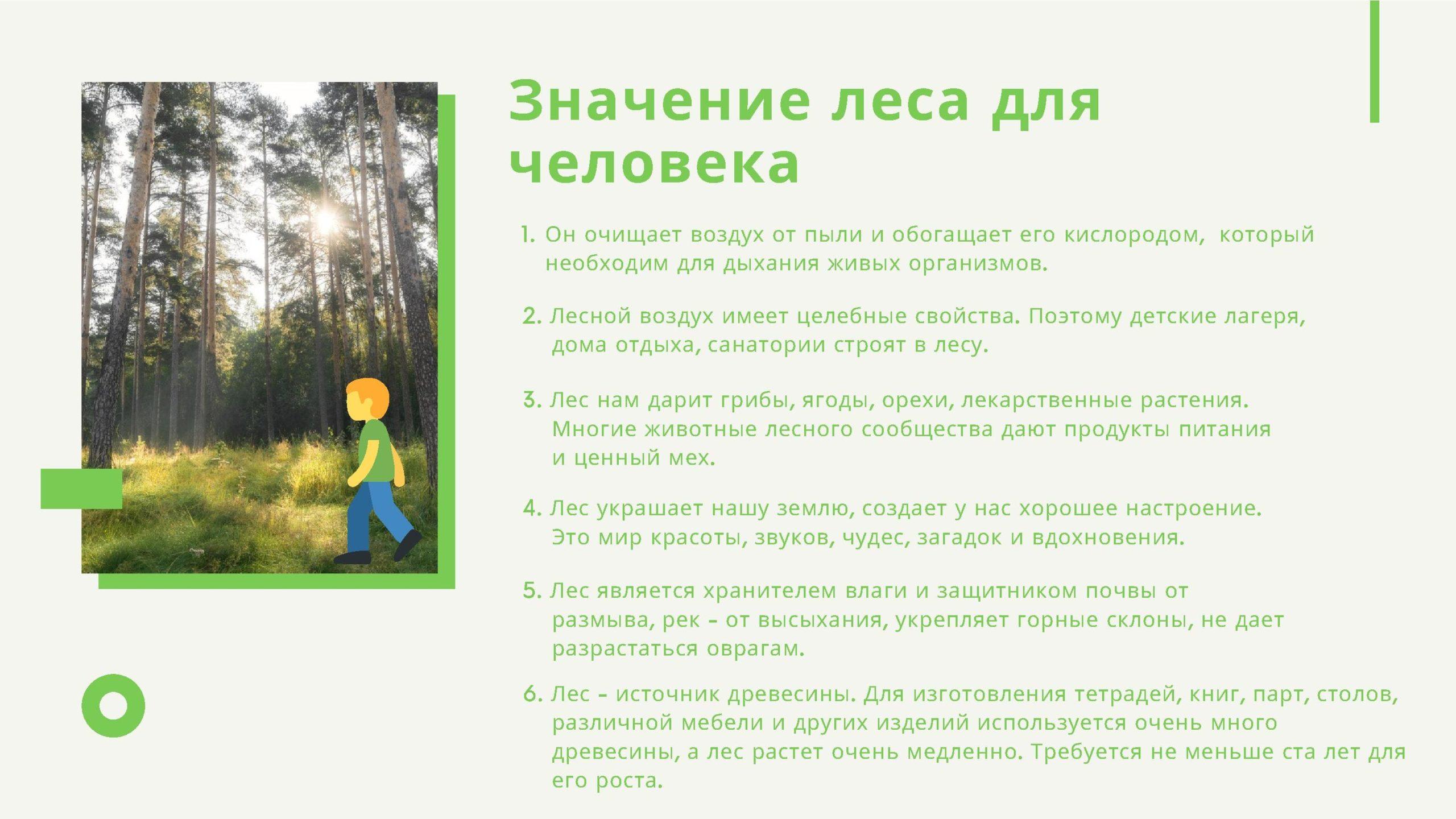 Значение леса для человека
