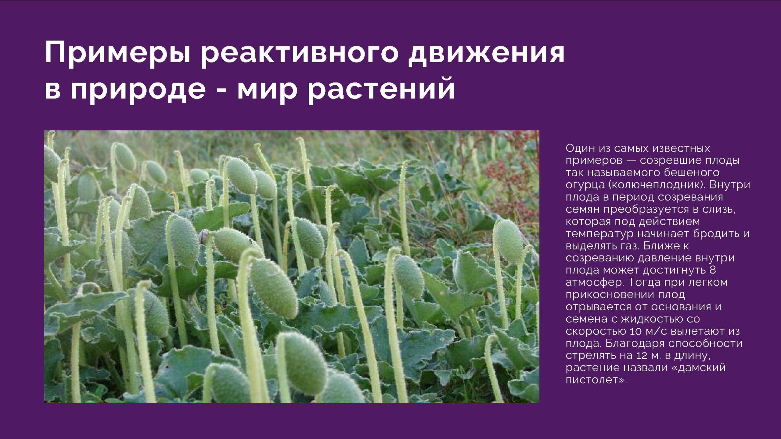 Примеры реактивного движения в природе- мир растений