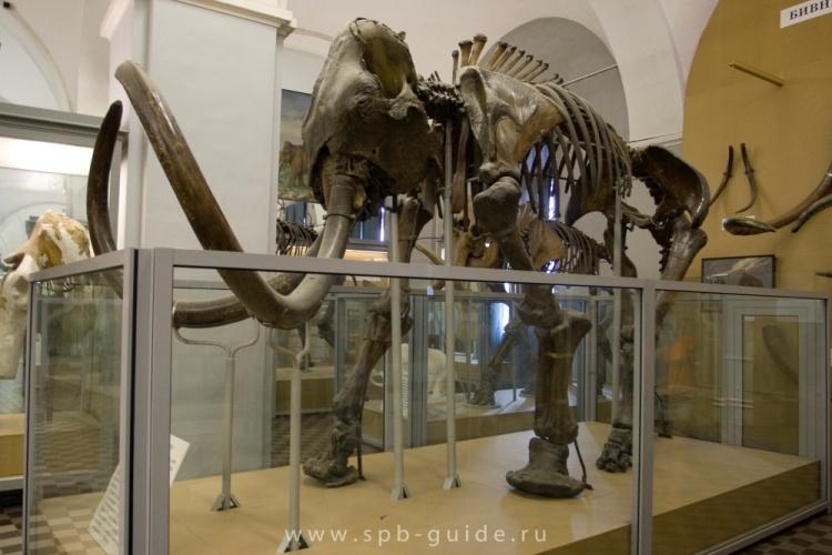 Рисунок 1. Фотография экспозиции в Зоологическом музее Академии Наук, г. Санкт-Петербург.
