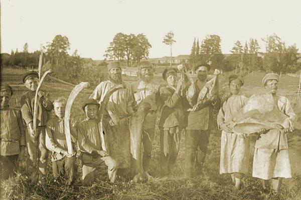Рисунок 1. Фотография раскопок скелета мамонта, 1927 год. Прикамский мамонт