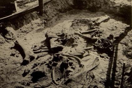 Рисунок 2. Раскопки скелета. Ярославский мамонт